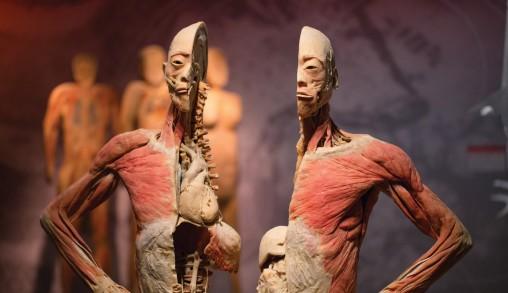 Foto Real Bodies: leer alles over het menselijk lichaam