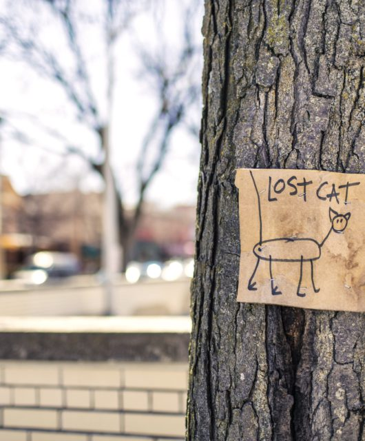 lost-cat-tree-sign-fun-159868